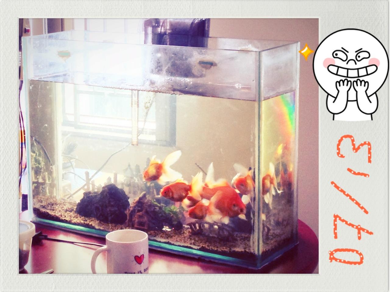 P: Fish Tank