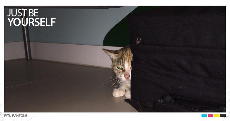 B: Foster Cat