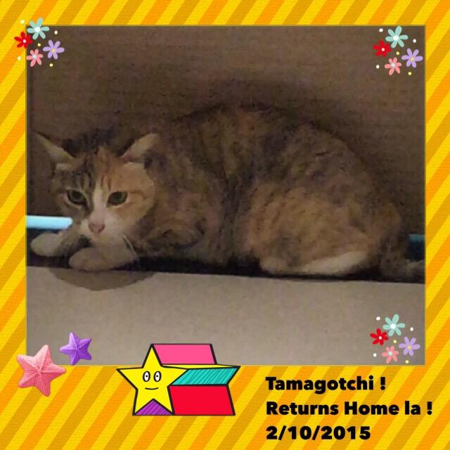 B: Tamagotchi goes home